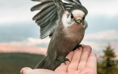 Does A Bird In The Hand Keep You From Two In The Bush?